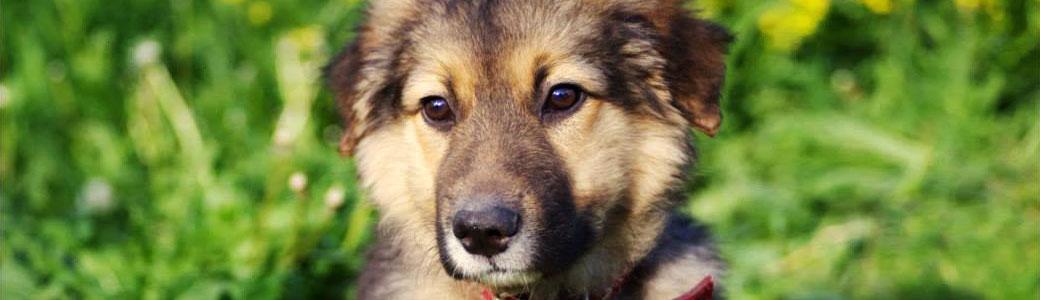 Hund adoptieren aus Russland